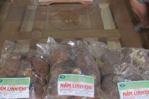 8X khởi nghiệp từ trồng nấm xuất khẩu, lãi 500 triệu đồng/năm