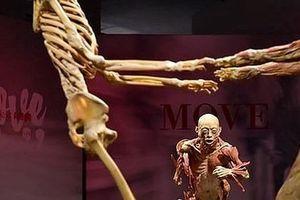 Triển lãm 'Sự bí ẩn đặc biệt của cơ thể người': Chờ báo cáo mới đưa ra quyết định