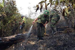 Ban quản lý rừng phòng hộ Ia Grai trục lợi tiền tỷ từ trồng rừng?