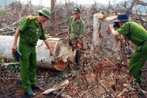 Để mất hơn 500 ha rừng, nguyên giám đốc công ty lâm nghiệp bị khởi tố