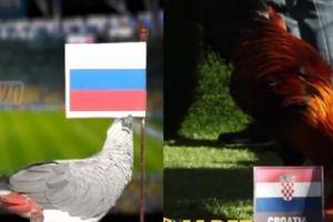 Dự đoán World Cup Nga vs Croatia: Khó cho các nhà tiên tri động vật