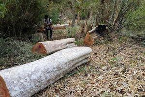 Điều tra hàng loạt sai phạm tại ban Quản lý rừng phòng hộ Ia Grai