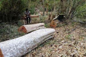 Chuyển hồ sơ sang cơ quan điều tra vụ hàng trăm ha rừng phòng hộ Ia Grai 'biến mất'