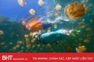 Đến Palau bơi cùng hàng triệu con sứa không nọc độc