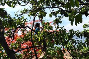 Cô gái trẻ leo lên cây, la hét bất chấp vực sâu phía dưới