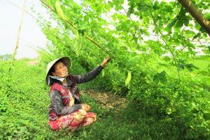 Phụ nữ tiết kiệm tín dụng để giúp nhau phát triển kinh tế ở Mỹ Nam Long