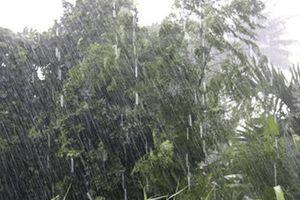 Dự báo thời tiết 12/7: Khu vực phía Bắc tiếp tục có mưa, dông