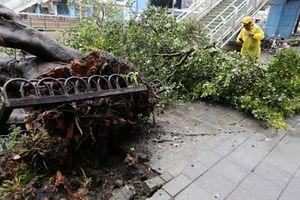 Bão càn quét Đài Loan