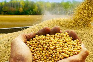 Cuộc chiến... hạt đậu tương, Việt Nam được lợi gì?
