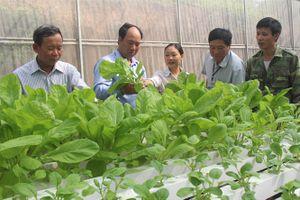 Vợ chồng trẻ bỏ phố về làng trồng rau thủy canh đầu tiên ở Phổ Yên