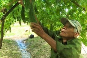 Gắn dạy nghề với tái cơ cấu nông nghiệp