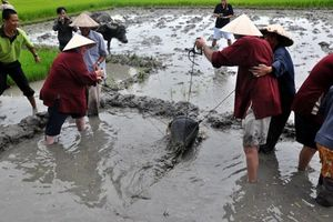 Tát nước lên ruộng