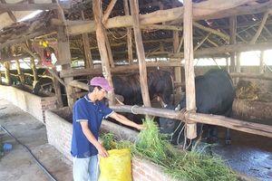 Phát triển bò thịt chất lượng cao