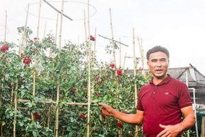 Nông dân hái ra tiền nhờ học nghề trồng hoa công nghệ cao