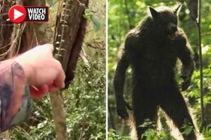 Phát hiện sinh vật 'nửa người, nửa chó' khi đi bộ trong rừng