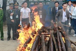 30 tháng hành động chống nạn buôn bán ngà voi, sừng tê giác