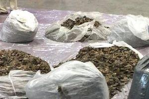 Bắt quả tang hơn 300kg vảy tê tê vận chuyển từ Nigeria về Việt Nam