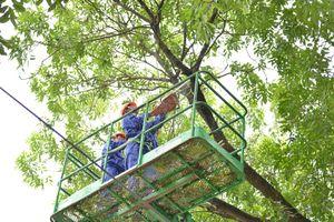 Cắt tỉa cây xanh đảm bảo an toàn trong mùa mưa bão