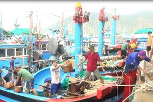 Mùa cá về, ngư dân trúng hàng trăm triệu mỗi đêm