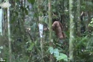 Thổ dân cuối cùng của một bộ lạc sống đơn độc trong rừng Amazon suốt 22 năm