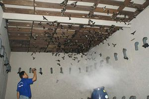 Bạc Liêu chi ngân sách cho 14 người đi Malaysia học nuôi chim yến