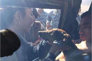 'Kỳ tích' rơi khỏi máy bay chó vẫn sống tới 6 ngày trên sa mạc