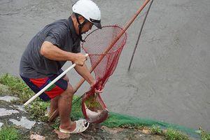 Mặc mưa lớn, dân Hà Nội hí hửng đổ ra sông bắt cá