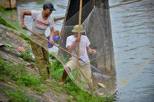 Sau mưa lụt, người Hà Nội hò nhau cất vó trên sông Kim Ngưu