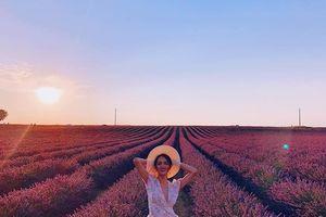 Hương Giang đẹp ngây ngất giữa cánh đồng hoa Lavender trên đất Pháp