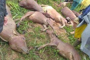 Hòa Bình: Sạt lở núi vùi lấp lán trại khiến 1 người tử vong, 11 con bò bị vùi lấp