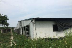 Đại Từ - Thái Nguyên: Khốn khổ vì các trại lợn ''hành'' dân