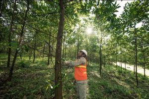 1/3 diện tích rừng tự nhiên Tiểu vùng Mekong mở rộng đã bị mất