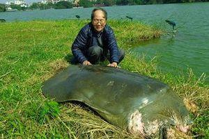 Đề xuất hợp tác Trung Quốc bảo tồn loài rùa Hồ Gươm