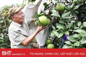 Vườn mẫu sum suê cây trái của cụ ông 80 tuổi