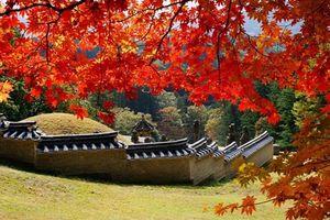 Say lòng trước vẻ đẹp Hàn Quốc mùa lá đỏ