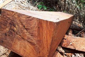 Kỷ luật hàng loạt lãnh đạo xã để mất vàng, mất rừng