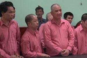 Bình Định: Trả hồ sơ 'đại án' phá rừng để thẩm định lại