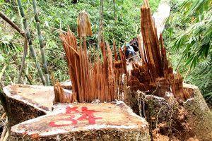 Quảng Nam: Để xảy ra mất rừng và khoáng sản, nhiều cán bộ bị kỷ luật