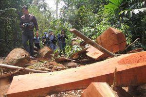 Quảng Nam: Kỷ luật nhiều cán bộ vì để mất rừng và khoáng sản
