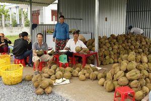 Vĩnh Long: Ùn ùn đi ăn sầu riêng 19.000 đồng/kg, ăn xong bỏ lại hạt