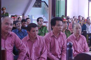 Vụ phá 64 ha rừng tại Bình Định: Trả hồ sơ, xác định lại thiệt hại