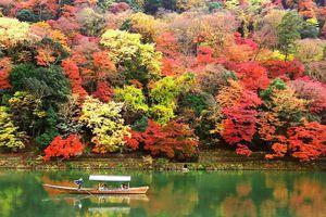 Hành trình tuyệt đẹp thưởng trọn mùa thu Nhật Bản