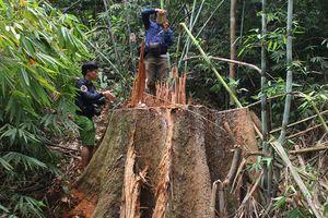Nhiều cán bộ ở Quảng Nam bị kỷ luật vì để mất rừng, khoáng sản