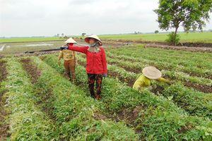 Đồng Tháp: Chuyển đổi hơn 6.600ha đất trồng lúa kém hiệu quả