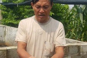 Nuôi 3 vạn ếch, U50 thành Nam bỏ túi hàng chục triệu đồng/tháng