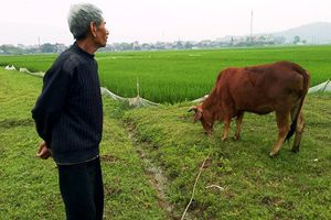 Vụ trâu bò cõng phí đồng cỏ ở Thanh Hóa: Xử lý phê bình, rút kinh nghiệm