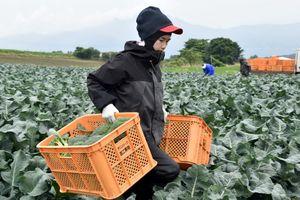 Thủ tướng Nhật chỉ đạo mở cửa đối với lao động phổ thông nước ngoài