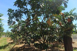 Nghị quyết 'tam nông' dẫn lối ở Hà Tĩnh - Bài 1: Nông dân là chủ thể