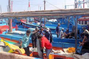 Liên kết chuỗi, chất lượng cá ngừ đạt tiêu chuẩn lên đến 98%