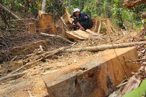 Vụ phá rừng phòng hộ Sông Kôn: Kỷ luật chủ tịch xã